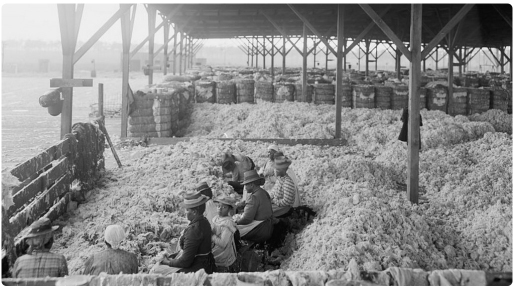 cotton-and-slaves-1024x5761111